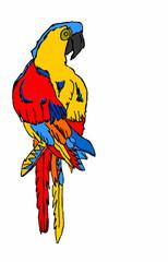 pappagallo ara su sfondo bianco