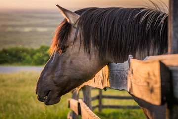 Horse behind the Fence
