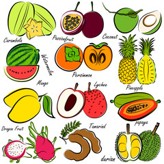 illustration of  fruits set , hand drawn vector