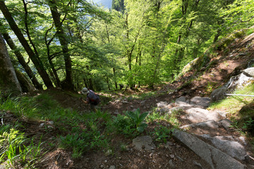 Randonneur à  flanc de forêt