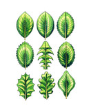 Types and leaf shape. Botany poster