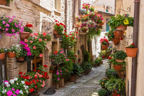 Vicolo storico con fiori - 66208985