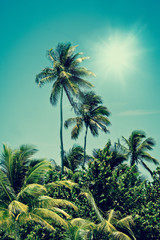 Tropical palm tree oasis in sunshine