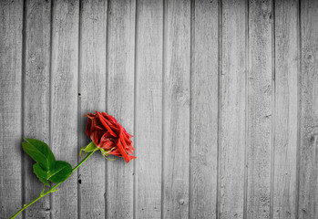 Bright wood background with a red rose