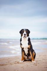 beautiful dog on the beach