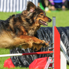 sportlicher Hund