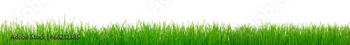 Papiers peints Vegetal Green grass