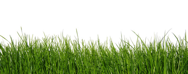 Green grass on white background © Alekss