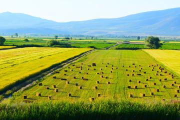 tarım&ziraat