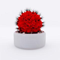 Cactus Red Nature