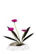 canvas print picture - Ikebana vor weißem Hintergrund
