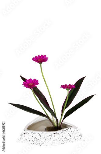 canvas print picture Ikebana vor weißem Hintergrund
