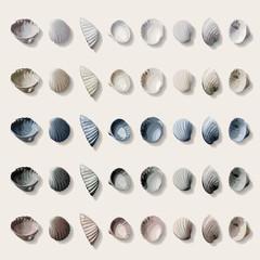 Colorful sea shells.