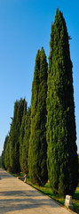 Cypresses road in the gardens of the Cartuja, Seville
