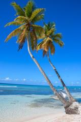 Морской пляж с пальмами