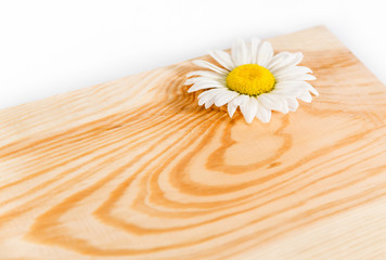 Wooden board and camomile