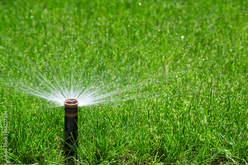 Sprinkler watering grass - 66227504