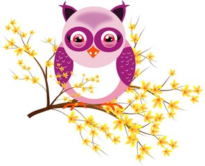 One purple owl on laburnum