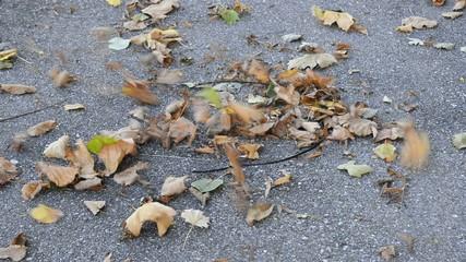 Blätter tanzen im Herbst