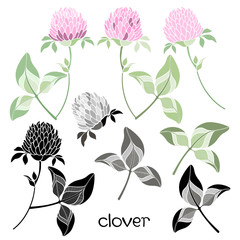 Set of clover  isolated on the white background.