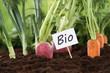 canvas print picture - Gesunde Ernährung Bio Gemüse im Garten