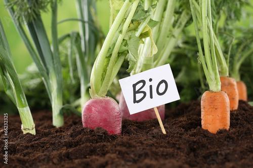 canvas print picture Gesunde Ernährung Bio Gemüse im Garten