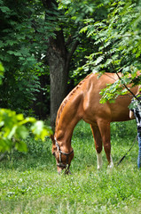 horse in the green forest.
