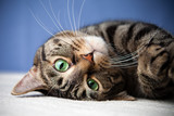 Rolling cat