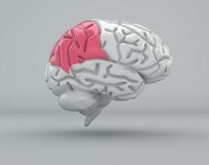 Cervello lobo parietale divisione