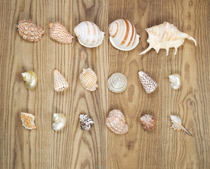 Assorted Seashells on Aged Wood