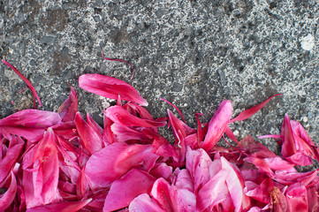 pink flower petals on concrete ground