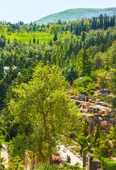 Горный летний пейзаж с деревьями на побережье в Крыму