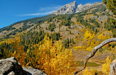 Fall foliage in the Rocky Mountains