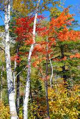 Autumn - Fall foliage in the Northeast USA