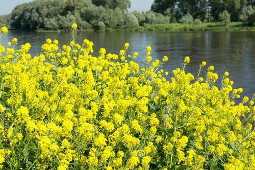 Leinwanddruck Bild Landschaft mit einem Fluss
