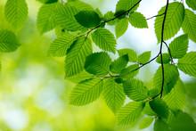 Fond vert naturel