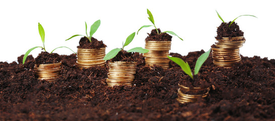 Business concept: golden coins in soil with young plants,