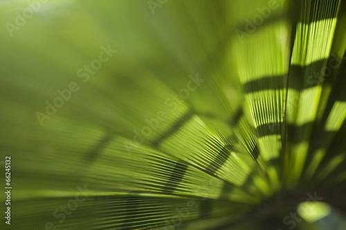 Aluminium Palm boom Palm leaf background