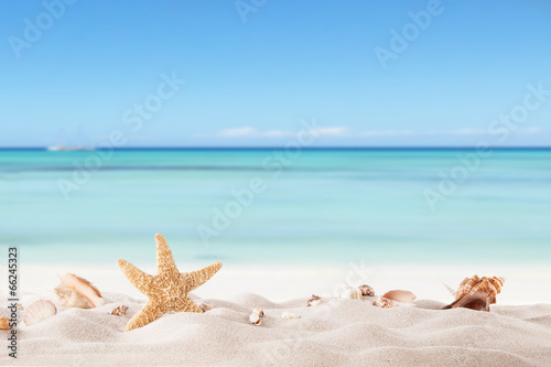 canvas print picture Summer beach with strafish and shells