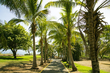 Road to the Pacific ocean through a park with palms