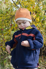 Child picking rose hips