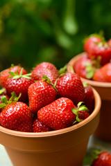 Ripe sweet strawberries in pots on table in garden
