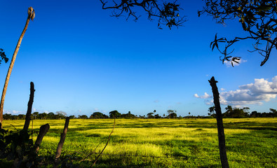 Meadow on one of the Caribbean islands