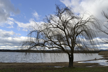 Árbol en la orilla