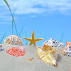 Muscheln mit Seestern im Sand....