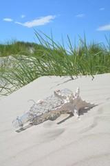 Glasflasche mit Seestern am Strand