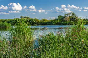 Reeds on the background of the river and the blue sky with cloud