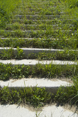 stairs overgrown with grass
