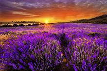 "Постер, картина, фотообои ""Lavender"""