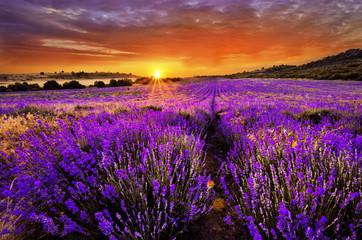 Lavender © narvall